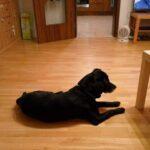 Pozdravy Alfonse z nového domova: