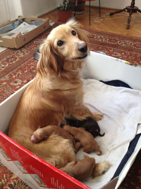 S maminkou a sourozenci